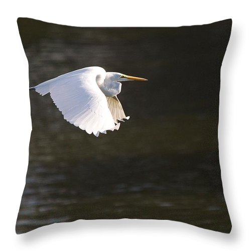Roy Williams Throw Pillow featuring the photograph Great White Egret Flight Series - 3 by Roy Williams