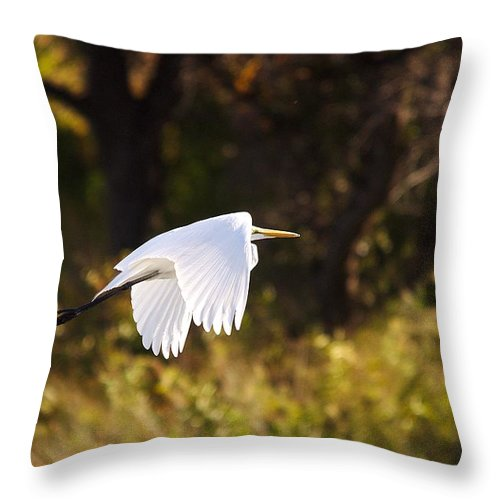 Egret Throw Pillow featuring the photograph Great White Egret Flight Series - 5 by Roy Williams