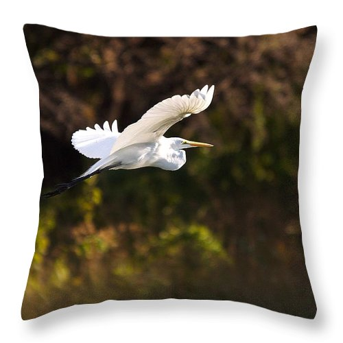 Egret Throw Pillow featuring the photograph Great White Egret Flight Series - 6 by Roy Williams