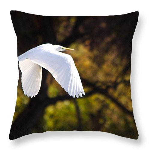 Egret Throw Pillow featuring the photograph Great White Egret Flight Series - 7 by Roy Williams