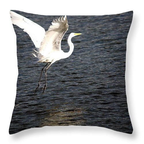 Egret Throw Pillow featuring the photograph Great White Egret Flight Series - 9 by Roy Williams