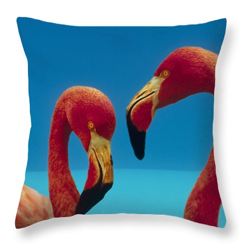 00172310 Throw Pillow featuring the photograph Greater Flamingo Courting Pair by Tim Fitzharris