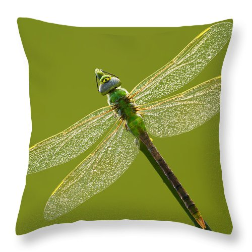 Green Throw Pillow featuring the photograph Green Darner by Mircea Costina Photography