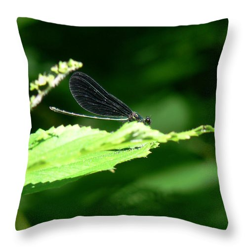 Nature Throw Pillow featuring the photograph Green Eyes Of Hope by Natalie LaRocque