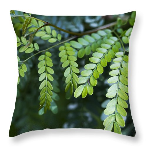 Green Throw Pillow featuring the photograph Green by Kathy Clark