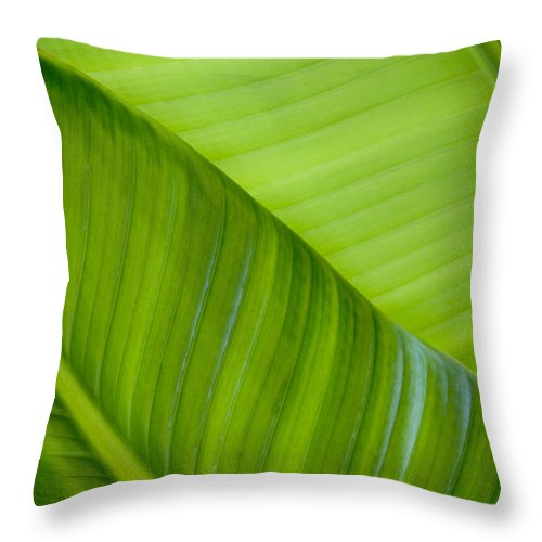 Abstract Throw Pillow featuring the photograph Green Leaf Patterns by Joe Carini - Printscapes