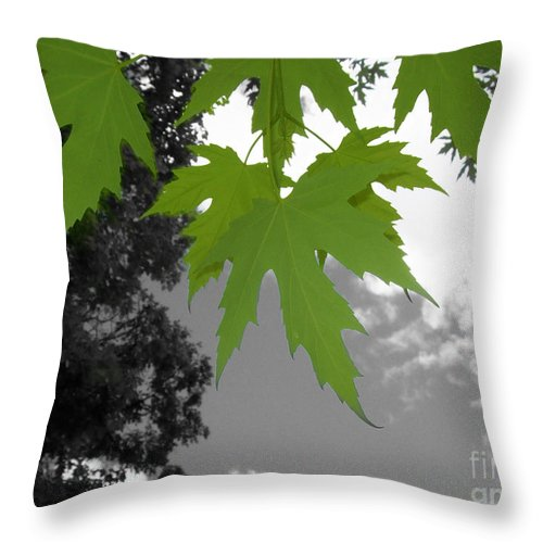 I Like To Look Up In Into The Blue Sky To See What I Can See. I Saw These Young Maple Leaves In Early Spring. I Loved Their Vibrant Colour And So I Took Out The Background Colours And Made It Black And White Only. I Like The Impact That The Contrast Gives. Throw Pillow featuring the photograph Green Maple Leaves by Mary Mikawoz