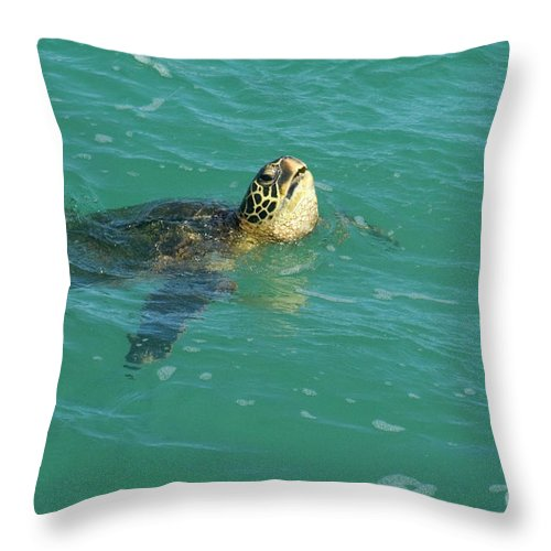 Green Throw Pillow featuring the photograph Green Sea Turtle 4 by Bob Christopher