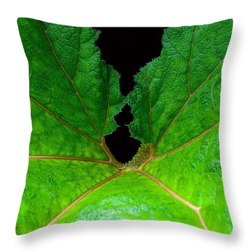 Large Leaf Throw Pillow featuring the photograph Green Spider Leaf by Tikvah's Hope