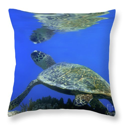 Tropical Throw Pillow featuring the photograph Green Turtle by MotHaiBaPhoto Prints