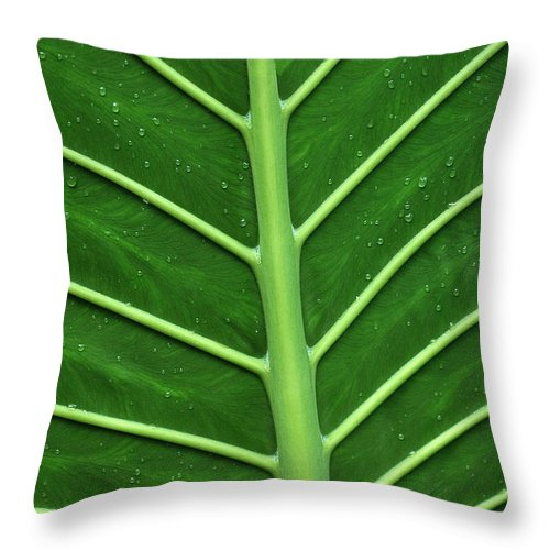 Green Throw Pillow featuring the photograph Green Veiny Leaf 1 by Mike Nellums
