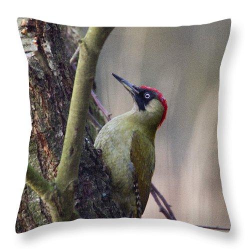 Green Woodpecker Throw Pillow featuring the photograph Green Woodpecker by Bob Kemp