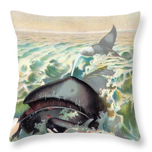 19th Century Throw Pillow featuring the photograph Greenland Whale by Granger