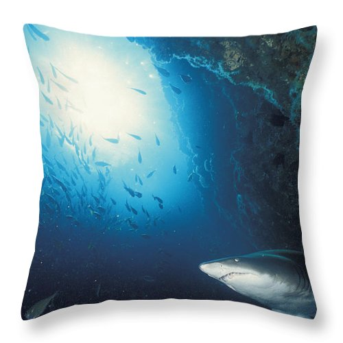 Color Image Throw Pillow featuring the photograph Grey Nurse Shark Turning Away From Reef by Axiom Photographic