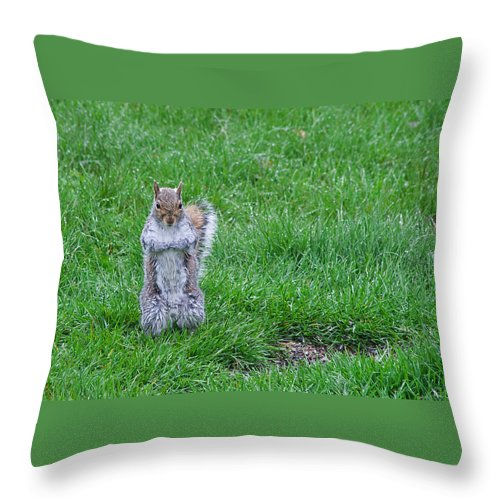 Squirrel Throw Pillow featuring the photograph Grey Squirrel In The Rain II by Jeff Galbraith