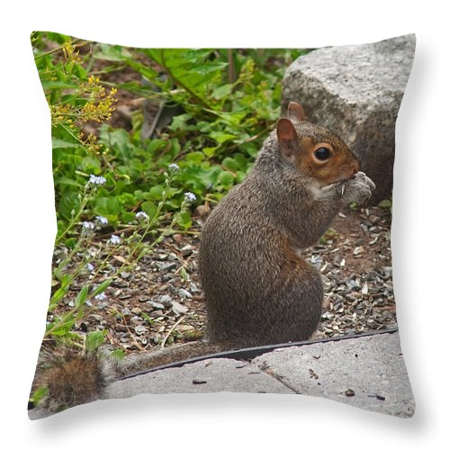 Squirrel Throw Pillow featuring the photograph Grey Squirrel by Jeff Galbraith