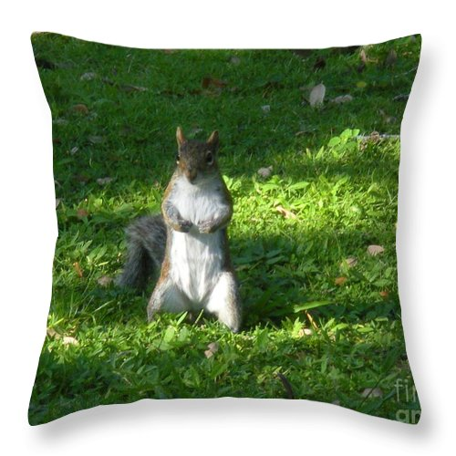 Animal Throw Pillow featuring the photograph Greynolds Park Squirrel by Maria Bonnier-Perez