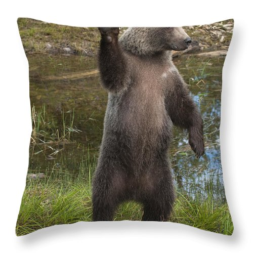 Bronstein Throw Pillow featuring the photograph Grizzly Bear Cub by Sandra Bronstein