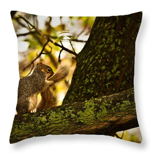 Grey Squirrel Throw Pillow featuring the photograph Grooming Grey Squirrel by Onyonet Photo Studios
