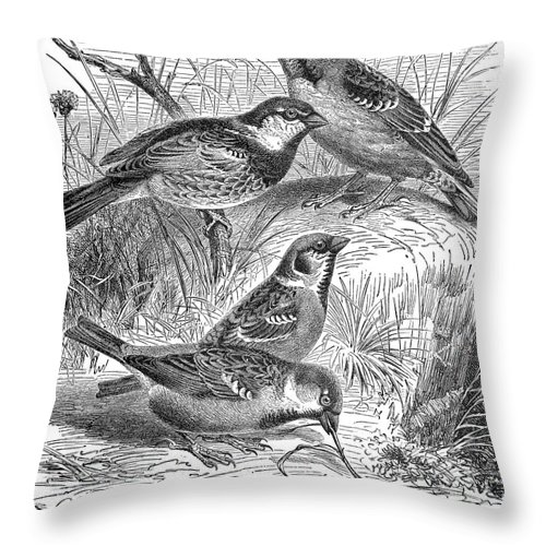 19th Century Throw Pillow featuring the photograph Group Of Sparrows by Granger
