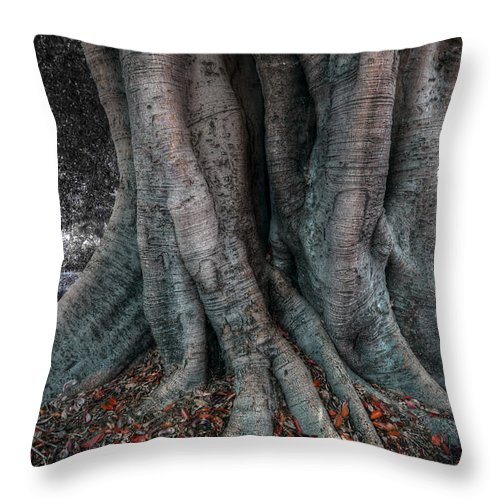 Landscape Throw Pillow featuring the photograph Growth by Wayne Sherriff