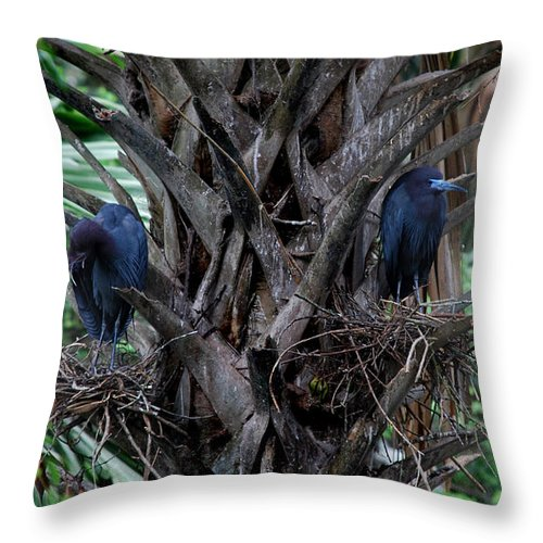 Guardians Throw Pillow featuring the photograph Guardians by Skip Willits