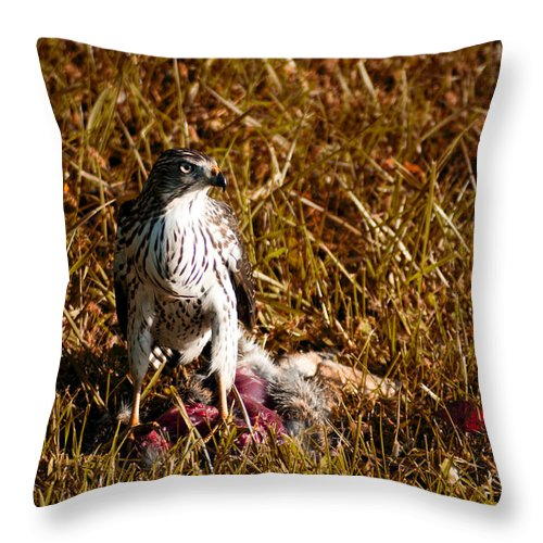 Guarding The Kill Throw Pillow featuring the photograph Guarding The Kill by Bill Cannon