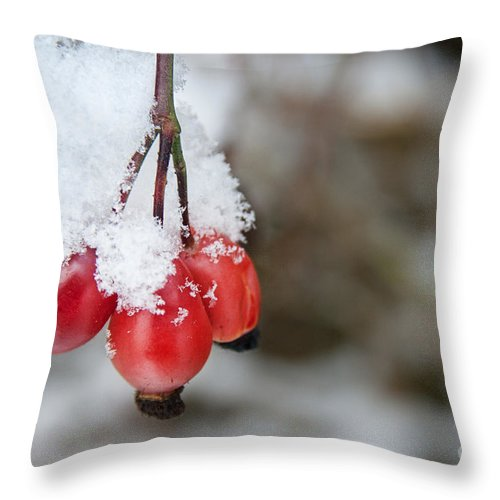 Red Berry Throw Pillow featuring the photograph Guelder Rose In The Snow by Ann Garrett