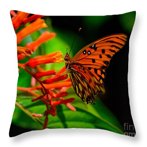 Butterfly Throw Pillow featuring the photograph Gulf Fritillary Butterfly by Stephen Whalen