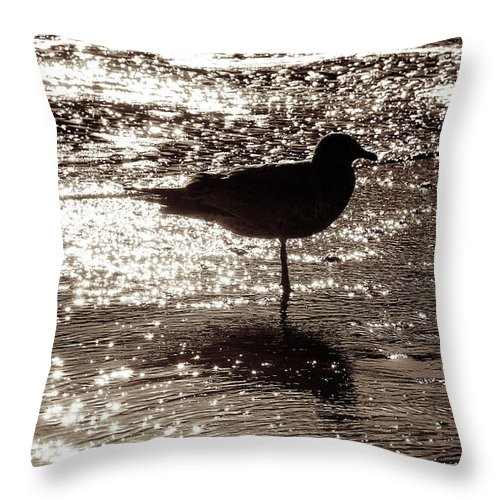 Beach Throw Pillow featuring the photograph Gull In Silver Tidal Pool by Jim Moore