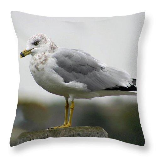 Seagull Throw Pillow featuring the photograph Gullwatch by Kristin Elmquist