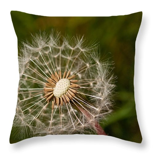 White Throw Pillow featuring the photograph Half A Dandelion by Tikvah's Hope
