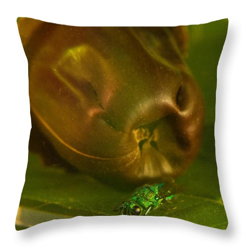 Throw Pillow featuring the photograph Halicid Bee 4 by Douglas Barnett