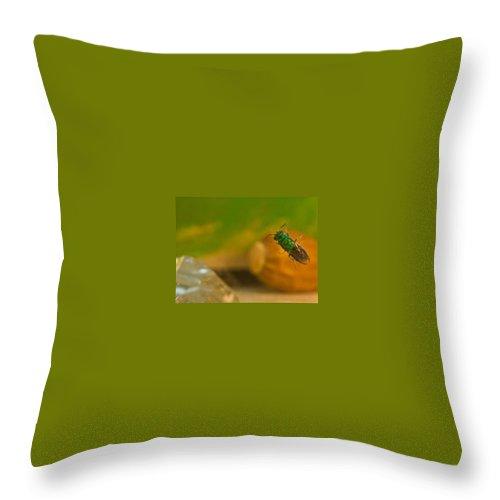 Halictid Throw Pillow featuring the photograph Halicid Bee 6 by Douglas Barnett