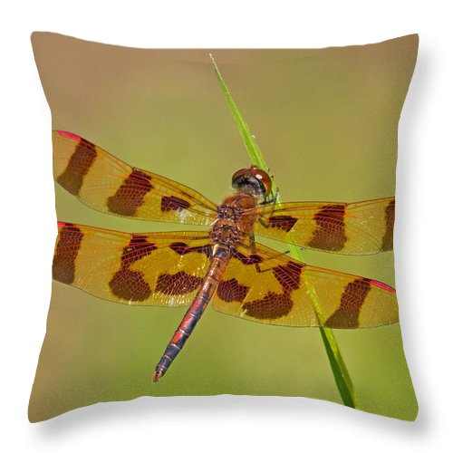 Dragonfly Throw Pillow featuring the photograph Halloween Pennant by David Freuthal