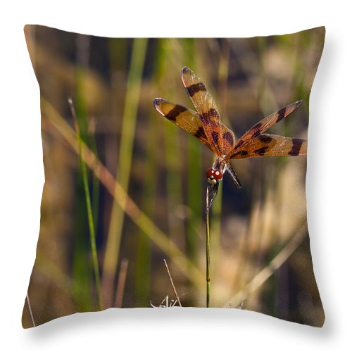 Color Throw Pillow featuring the photograph Halloween Pennant Dragonfly by Ed Gleichman