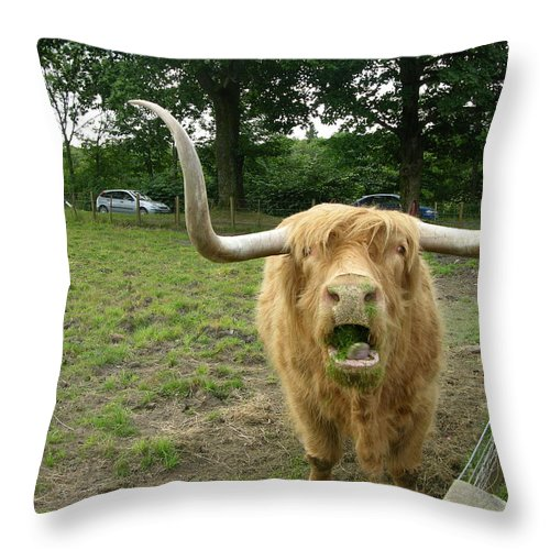 Hamish Throw Pillow featuring the photograph Hamish Highland Bull by Keith Stokes