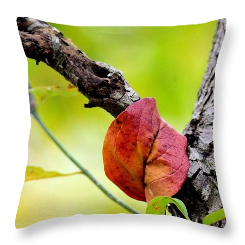 Hanging By A Limb Throw Pillow featuring the photograph Hanging By A Limb by Maria Urso