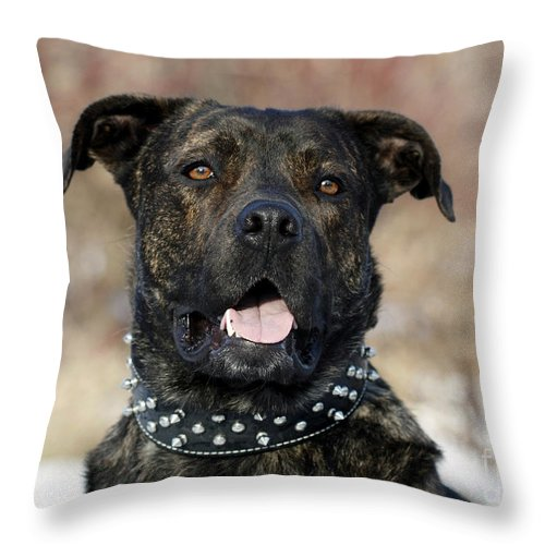 Happy Rescue Pooch Throw Pillow featuring the photograph Happy Rescue Pooch by Inspired Nature Photography Fine Art Photography