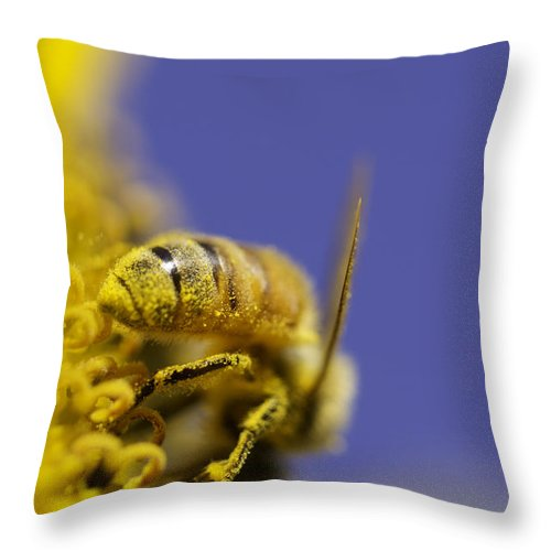 Bee Throw Pillow featuring the photograph Hard Worker by Danielle Silveira