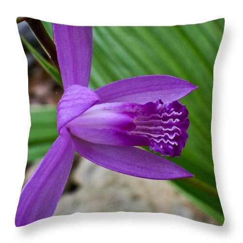 Orchidaceae Throw Pillow featuring the photograph Hardy Orchid 5 by Douglas Barnett