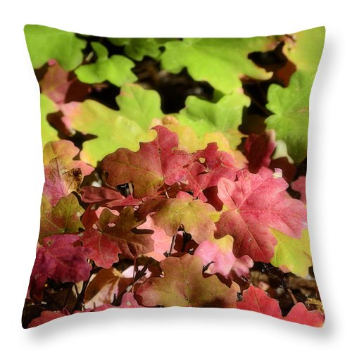 Fall Colors Throw Pillow featuring the photograph Harmony by Saija Lehtonen