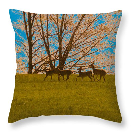 Deer Throw Pillow featuring the photograph Has Anyone Seen Rudolph by Trish Tritz