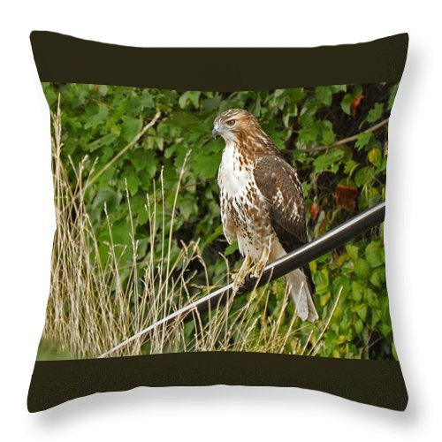Missy & David's Wedding 08-07-2010 Throw Pillow featuring the photograph Hawk At A Wedding by Christine Stonebridge