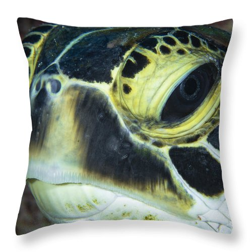 Sea Life Throw Pillow featuring the photograph Hawksbill Sea Turtle Portrait by Todd Winner