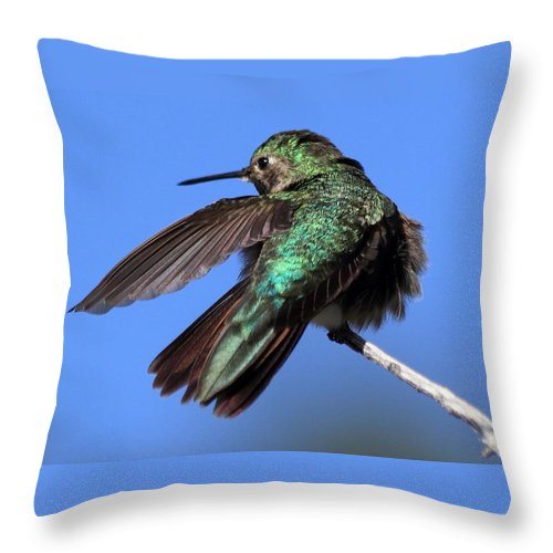 Hummingbird Throw Pillow featuring the photograph He Went That Way by Shane Bechler