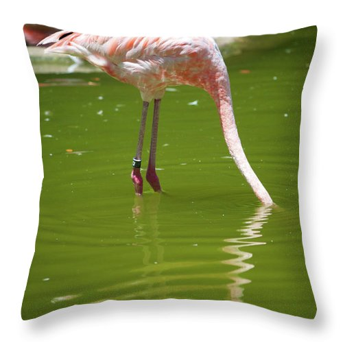 Flamingo Photographs Photographs Throw Pillow featuring the photograph Head Down by Brooke Roby