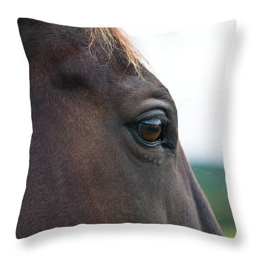 Animal Throw Pillow featuring the photograph Head Of A Wild Horse In The Wilderness by U Schade