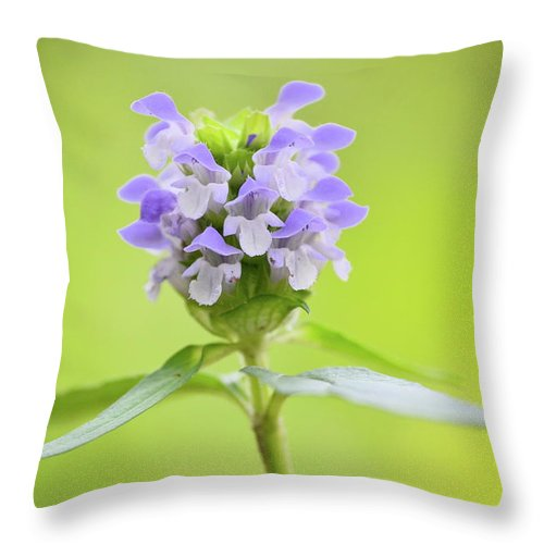 Heal-all Throw Pillow featuring the photograph Heal-all by JD Grimes