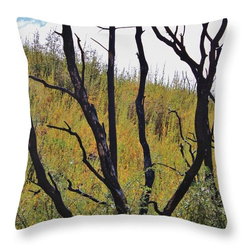 Wildfire Throw Pillow featuring the photograph Healing After The Fire by Caroline Lomeli